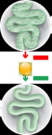 A szimetikon hatása a belekre, előtte és utána
